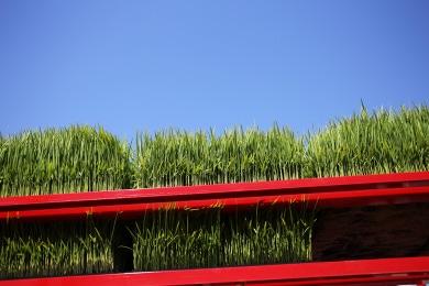 樫山農園の米